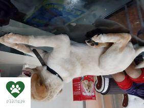 PaaltuPK - Pakistan #1 Pets Portal